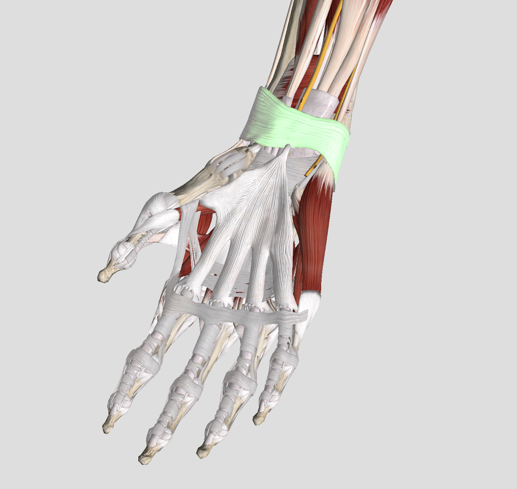 What can I do about my Carpal Tunnel Syndrome?